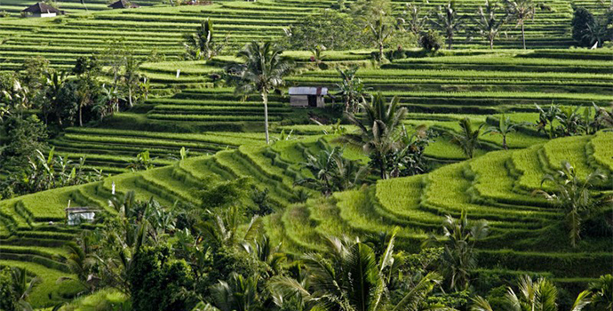 Bask in the beauty of the world famous Rice Terraces