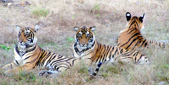Search the reserve in Ranthambore for wild tigers
