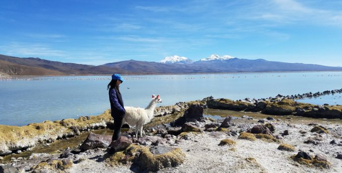 Marvel at the beautiful landscapes of Sajama National Park