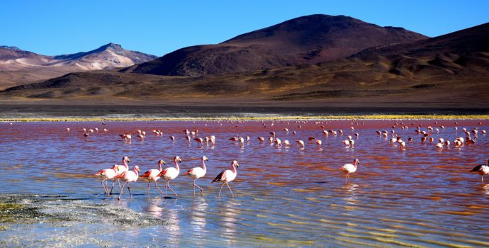 Admire the pink flamingos of the Red Lagoon